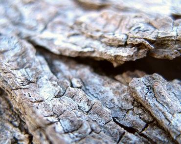 Трещины на коре